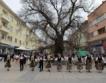 Бряст от Сливен е европейско дърво на годината