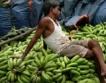Нов лидер в търговият с банани