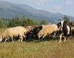 Предложение за нова наредба за малките ферми