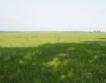 Най-скъпата земеделска земя = 1453 лв./дка