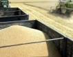 Хлебната пшеница = 280-300 лв./тон