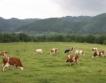 """Среща между ДФ """"Земеделие"""" и агробизнесът"""