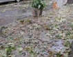 Щетите след бурята в София