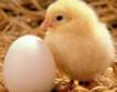 Росселхознадзор залови 20 т американско пилешко