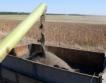 Добрич: 234 055 тона слънчогледово семе