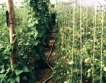 България&Холандия в земеделието