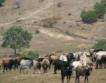 Започна изплащане 64 млн. лв. за животновъди