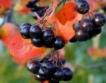 5 млн.лв. за производители на плодове&зеленчуци