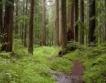 ЮЗДП предложи 380 хил. куб. м. дървесена на търг