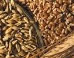 Цената на пшеницата пада необичайно