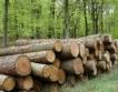 За & против мораториум върху износа на дървесина