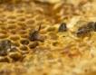 Започва прием по пчеларската програма