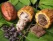 Кот д'Ивоар:Какао & шоколад