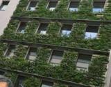 Вертикални градини & панелки