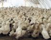 САЩ отпускат $330 млн. за птичи грип