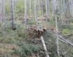 Снегът в Смолян повреди 846 хил. куб. дървесина
