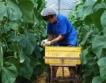 Нови продукти за растителна защита