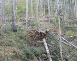 Промени в Закона за горите, първо четене
