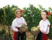 Очаква се изключителна реколта от грозде