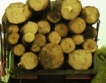 Закон за горите:GPS на камиони + подробности