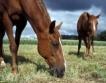 500 хил. лв. помощи за собственици на коне