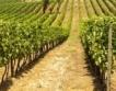 Лозя & вино: Очаквания за реколта 2015