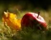 Пестициди в ябълките из Европа