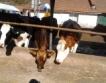 В с. Добродан правят топла вода + електричество от мляко