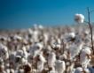 Плащания за памук + земеделски умения