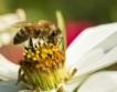 """Пчели пренасят """"добри"""" пестициди"""