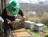 Пчеларството у нас през 2015: повече пчели + мед