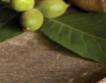 Луканка от зеленчуци на Фудтех 2016