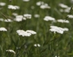 Европа иска български био - леща, билки & резене