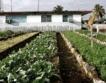 Ел Ниньо в Куба = Щети за земеделието