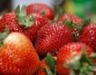 Берачи на ягоди с 38 евро на ден