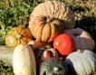 ЕК търси нови земеделски пазари