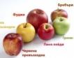 Време е за ябълки: Видове & факти