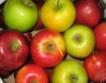 България е произвела най-много ябълки + череши