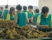 Промишлена обработка на тютюн в Момчилград