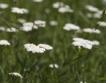 Билките ще съживят българските села