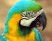 Папагали от 3 континента в Бургас