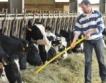 Холандия: Намаляват фермите за мляко
