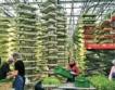 Мода: Вертикални ферми