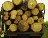 1 лев закупена дървесина = 7-8 лева в икономиката