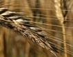 11 млн.дка засети с пшеница