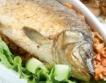 Всичко за рибата в България