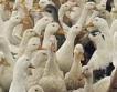 +9,7 млн. лв. за справяне с птичия грип