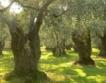 Как да присадим дърво с машина? + видео