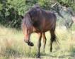 България №13 по брой на коне и магарета