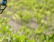 Мравките - първите земеделци